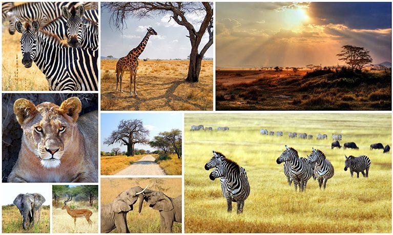 Sudafrica… amore a prima vista