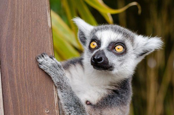 Madagascar tour Avaratra e mare